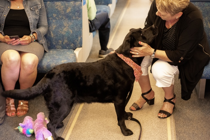 Penny the black lab greets a customer on the GO Train