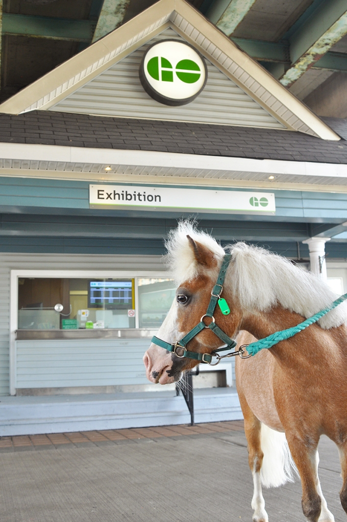 Image shows a pony outside Exhibition GO.