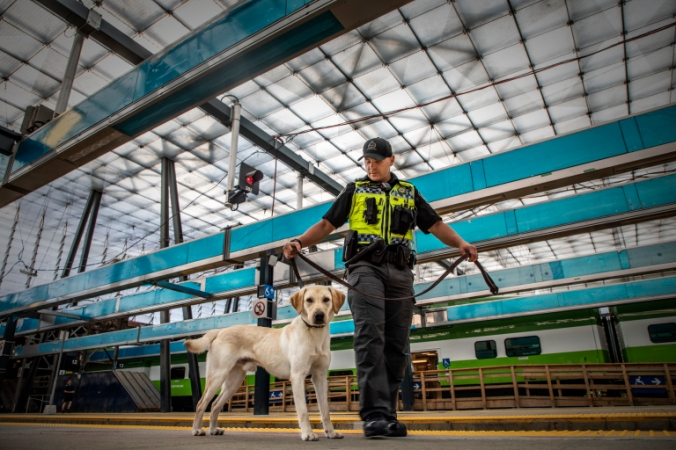 A furry member of the K9 unit patrols Union Station tracks, along with his human handler.